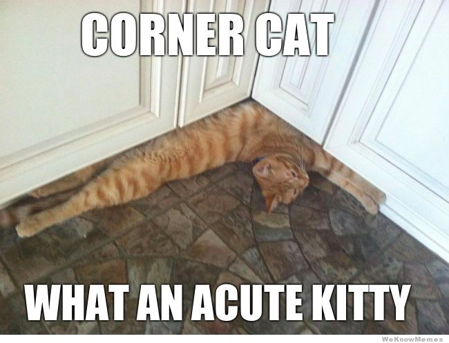 What acute kitty!