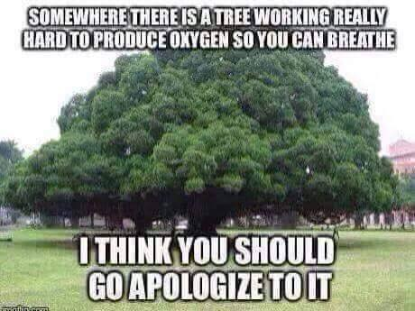 Apologize to the tree for wasting its time.