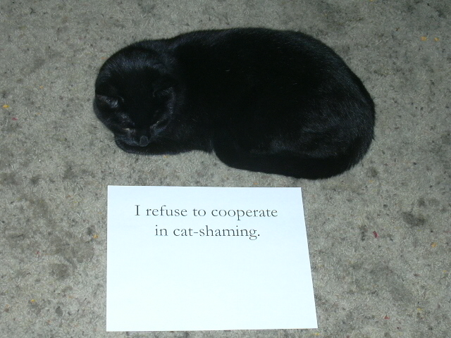 Edda being 'cat shamed'.