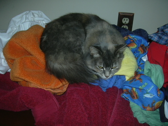 Felicity *helping* with laundry