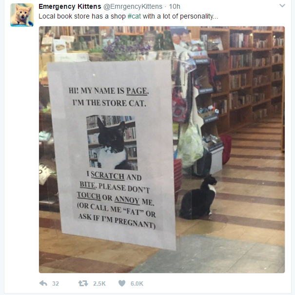 Bookstore kitty with cattitude!