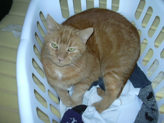 Cullen helping with the laundry.