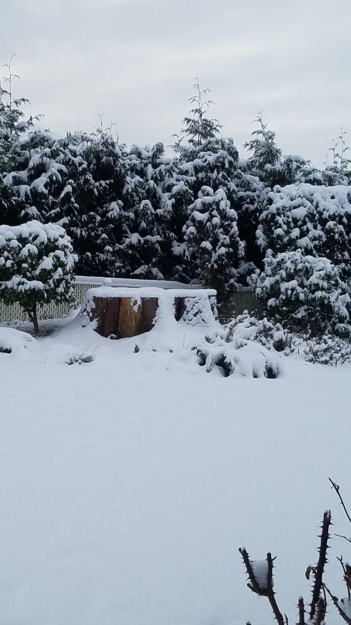 Snowy tree stump.
